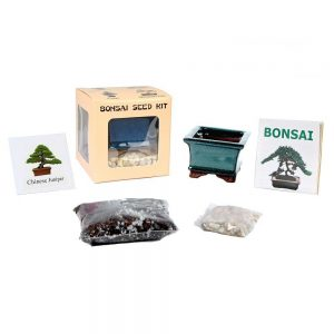 Bonsai Seed Kit