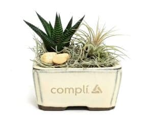 4 inch Container Succulent and Air Plant #19442 Black & Cream