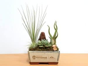 6 inch Container Succulent and Air Plants #19444 Black & Cream