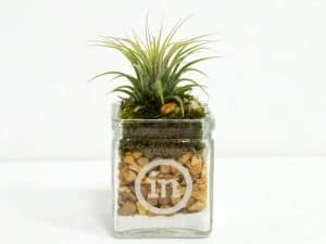 Square Glass 2x2 Air Plant #19465
