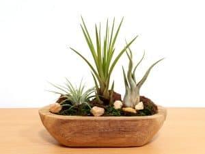 Driftwood Garden—Small Air Plants