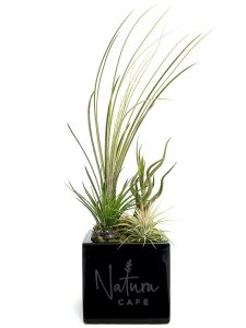 Square Vase 4x4 Succulent and Air Plants #19489 Black