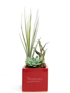 Square Vase 4x4 Succulent and Air Plants #19489 Red