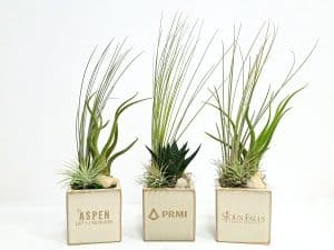 Square Vase 3x3 Succulent and Air Plants #19540