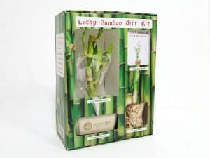 Lucky Bamboo Gift Kit #20000
