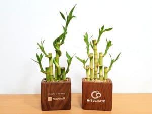 Rectangle Vase Lucky Bamboo