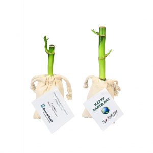 Lucky Bamboo Stalk in Cotton Bag
