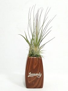 "Elegant Vase - 5"" Air Plants #65187 Woodgrain"