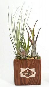 "Rectangle Vase - 4"" Air Plants #65188 Woodgrain"