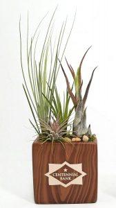 "Rectangle Vase - 4"" Air Plants #65188 Woodgrain"