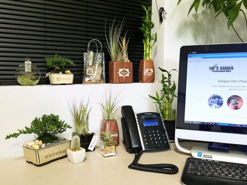Eve's Garden Promo Office